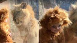 Quand un bébé déguisé en lion rencontre un vrai