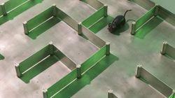 «Culte du labo», la rencontre entre science et architecture au
