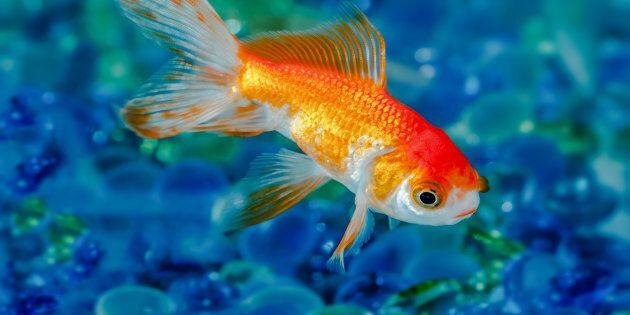 Voici quelques-uns des bons poissons d'avril qu'on a vus sur le