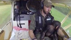 Un bébé chimpanzé prend la place du copilote après avoir été