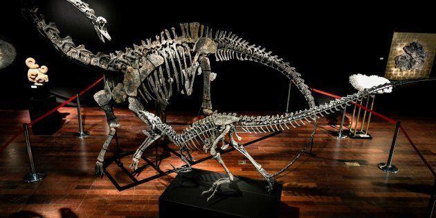 Des fossiles de dinosaures mis aux enchères à