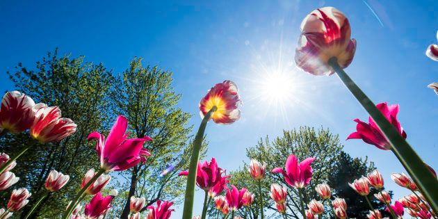 À vos caméras! Le Festival canadien des tulipes vous en mettra plein la