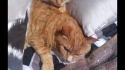 La femme aux 30 chats refuse