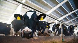 ALÉNA: les producteurs laitiers voient une lueur
