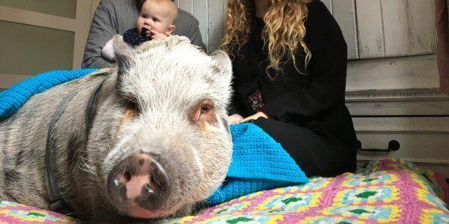 Une résidente de HoMa se bat pour garder son cochon