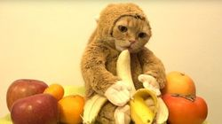 Ce chat déguisé en singe est irrésistible