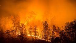 Risque élevé de feux de forêt partout au
