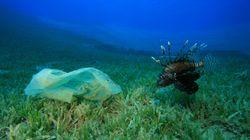 Un sac de plastique retrouvé au plus profond de