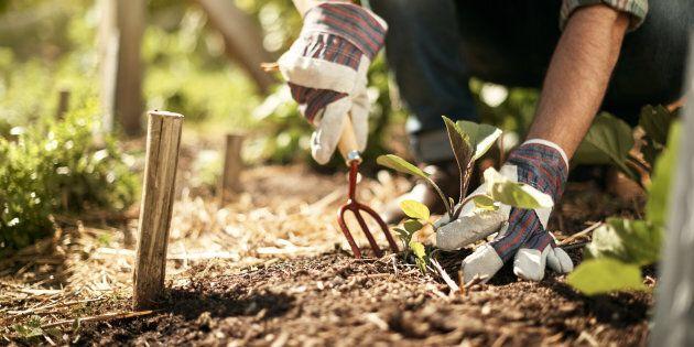 Fête des patriotes: c'est le début de la saison du jardinage au