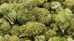 Cannabis : Un coup fumant de la SQ en