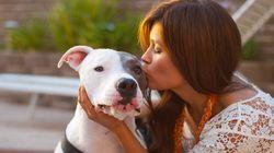 L'adoption du projet de loi sur les chiens dangereux devra probablement