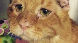 Ce chat est la preuve que tout le monde mérite une
