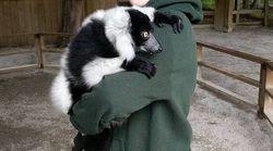 Des animaux volés dans un zoo de l'Ontario pourraient se trouver au