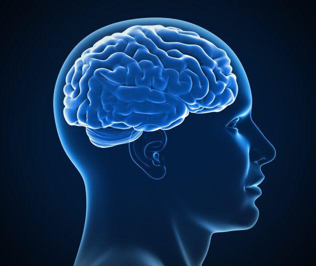 Des virus dans le cerveau pourraient jouer un rôle dans la maladie