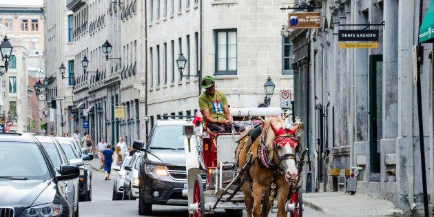 Les calèches seront interdites à Montréal dès