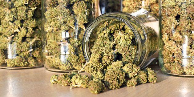 Les futurs magasins de cannabis embauchent au