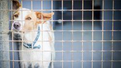 Des animaux périssent dans l'incendie des locaux de la SPCA à
