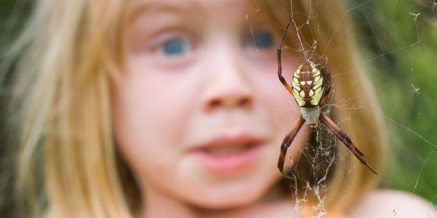 Voici pourquoi les araignées