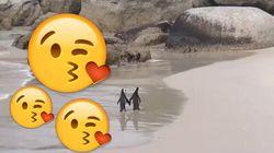 La marche romantique de ces pingouins va vous faire