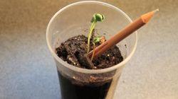 Ce crayon va devenir une plante verte
