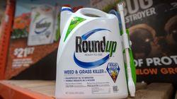 Reconnu coupable dans le procès Roundup, Monsanto