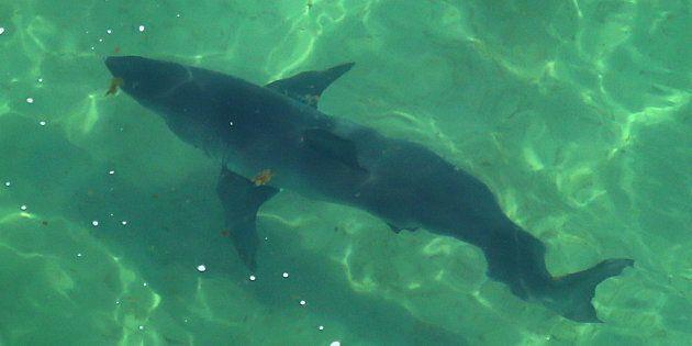 Des requins provoquent la fermeture d'une plage au Cape