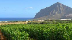 BLOGUE Les vins de Sicile mieux que