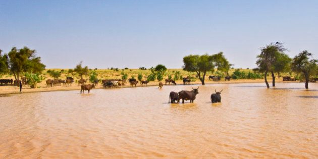 Village in the Sahel between Agadez and