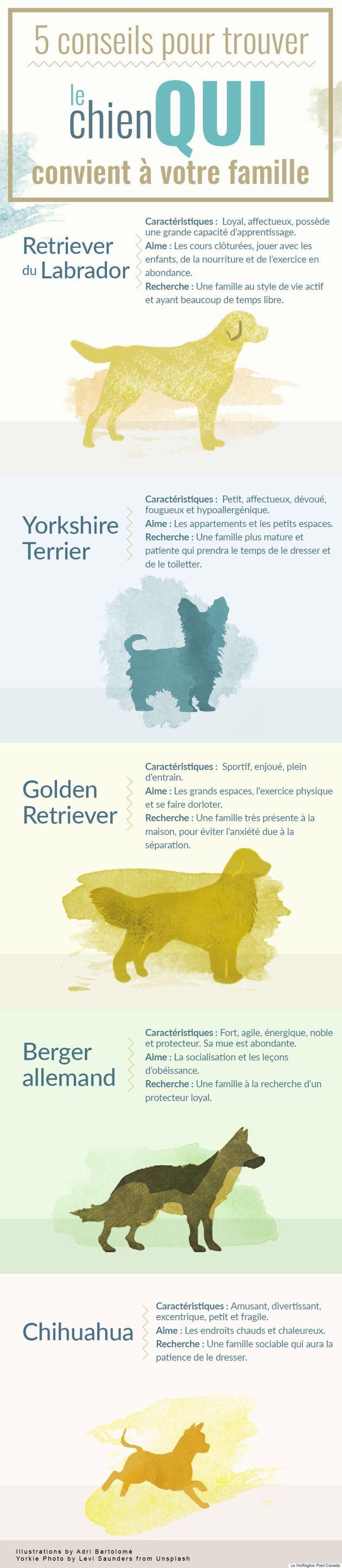 5 conseils pour trouver le chien qui convient à votre
