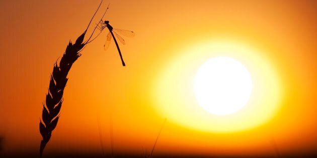 Avec le réchauffement, plus d'insectes, moins de