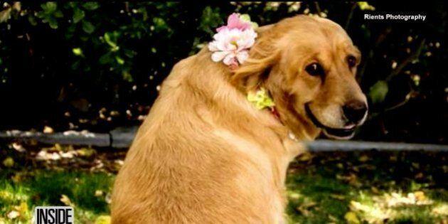 Enceinte, cette chienne est la vedette d'une séance de photos de