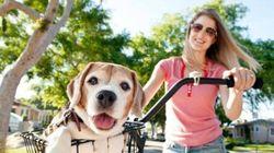 Ces superbes photos illustrent le lien spécial qui unit un chien et son