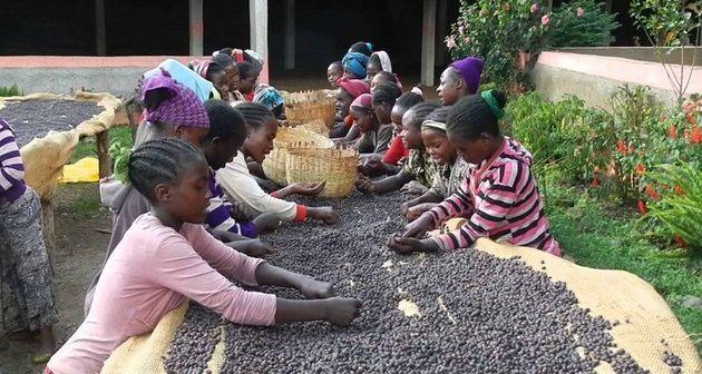 Café, thé et cacao: la plupart des certifications sont tout sauf