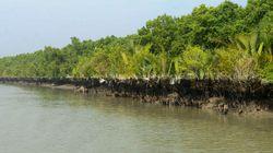 Le Bangladesh tente de protéger un sanctuaire de dauphins