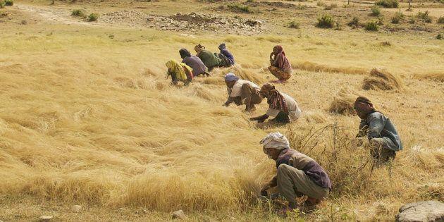 La recherche peut trouver des moyens de réduire les tâches fastidieuses de production et de transformation des aliments pour les femmes.