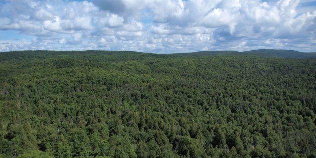 Grâce aux absorptions de CO2 des arbres de la forêt boréale, le Canada serait déjà en bonne voie pour
