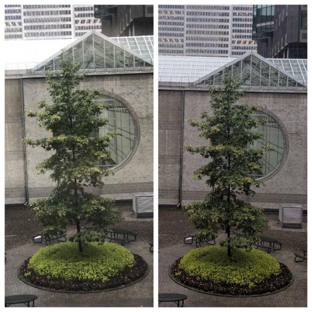 Les détails sont plus notables sur le Pixel 3, à droite, qui montre également mieux la faible luminosité d'un lundi nuageux.