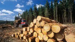 Chertsey: détruire une forêt millénaire et un site de villégiature avec un coup de