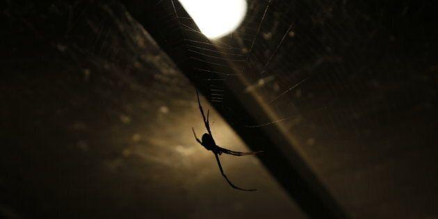 Il demeure que souvent, quand on a peur, on a peur, de sorte qu'on refuse de concevoir, et encore moins...
