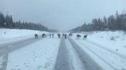 Un camionneur a cru voir «les rennes du père Noël» égarés sur une