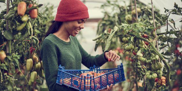 Un retour à une alimentation locale ne peut que générer des prix plus élevés (perte des économies d'échelle)...