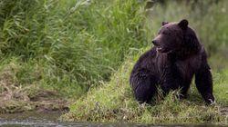 Des tests seront pratiqués sur l'ours qui a tué une mère et son
