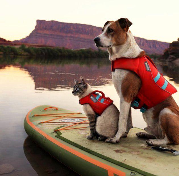 Henry et Baloo font du paddle.
