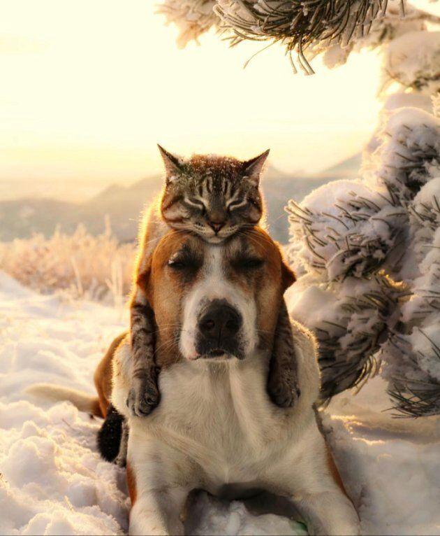 Henry et Baloo posent dans la neige.