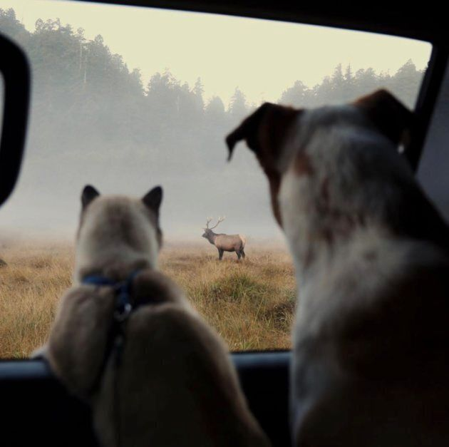 Henry et Baloo observent la faune et la flore pendant leur voyage.