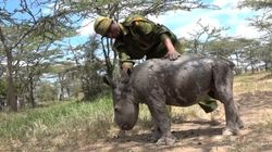 Ce bébé rhinocéros va vous faire fondre