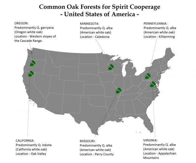 Forêts de chênes aux États-Unis