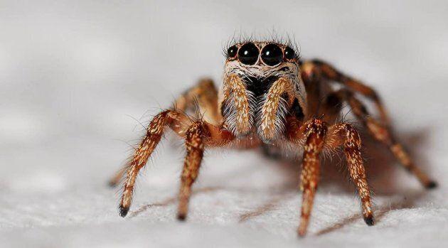Les phobies se caractérisent par une peur irrationnelle d'un objet ou d'une situation spécifique, comme...