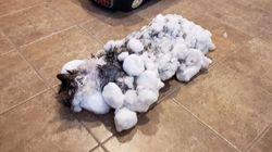 Le chat Fluffy, retrouvé congelé, a été
