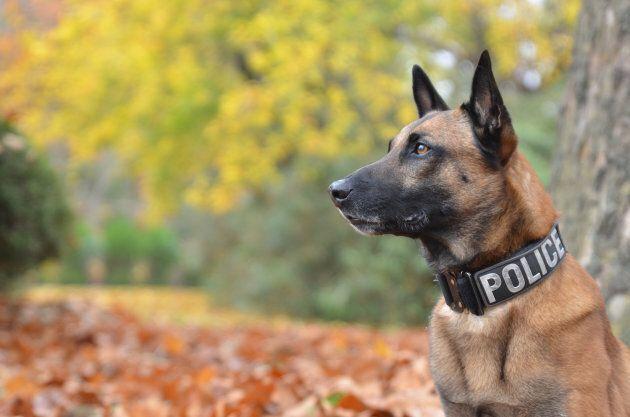 Les chiens les plus héroïques, d'hier à